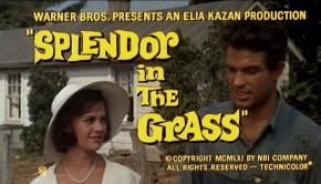 esplendor-grass